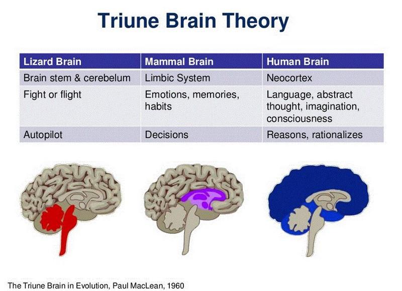 brain-evolution-financial-uxda