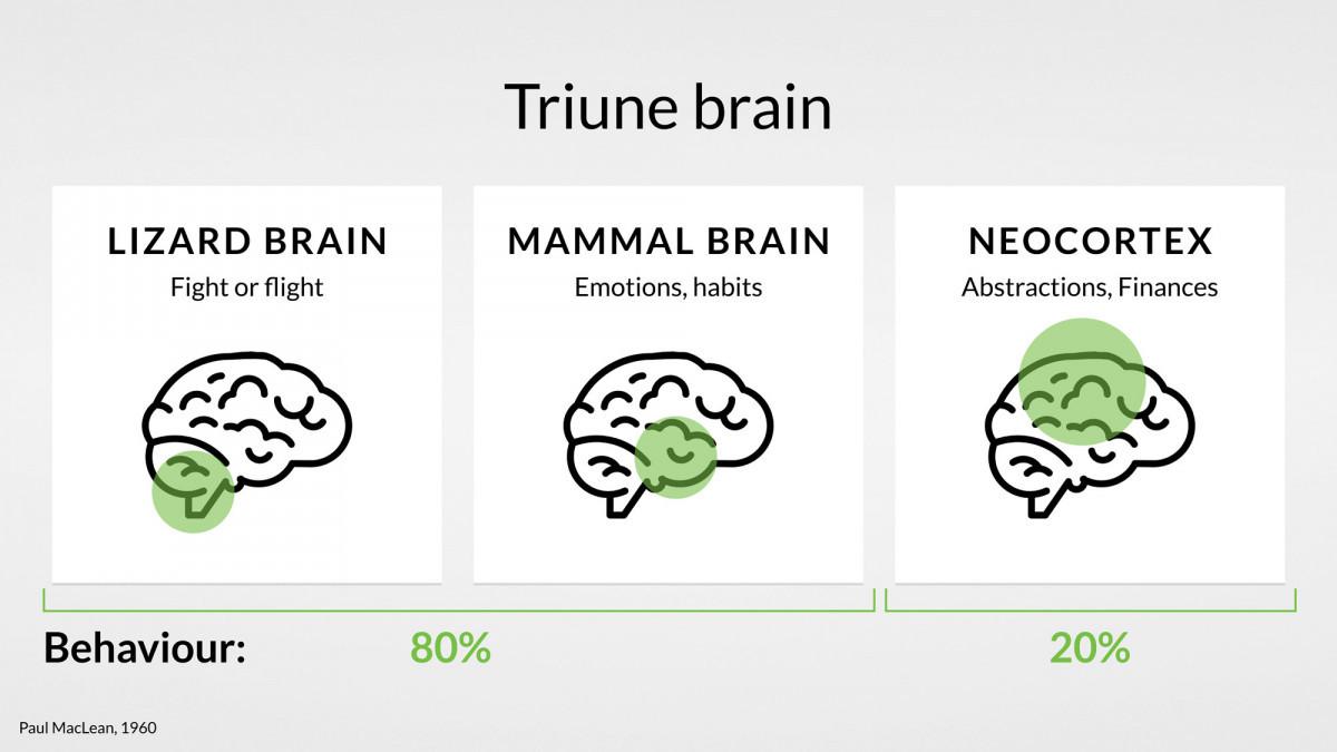 brain-user-behaviour-finance-habits-uxda